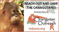 Orangutan Outreach Handout Cards