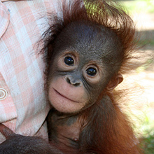Adopt Monti today!