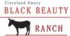 Black Beauty Ranch
