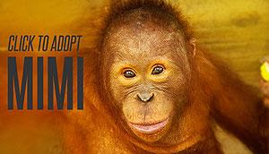 Adopt Mimi!