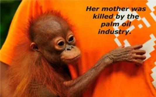 Dr Oz Declares War On Orangutans Orangutan Outreach