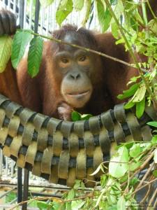 Mely-hammock