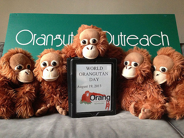 World Orangutan Day - August 19, 2013