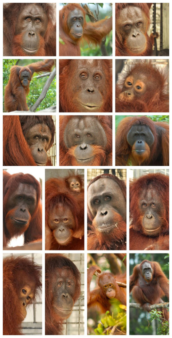 18 Lucky Orangutans are going back to the forest!!!