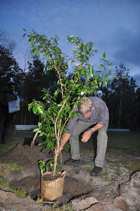 Harrison plants a Banyan tree