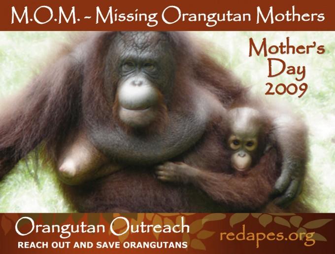 MOM-Banner-2009-ENG