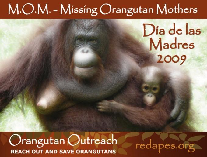 MOM-Banner-2009-ESP