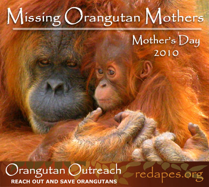 MOM-Banner-2010