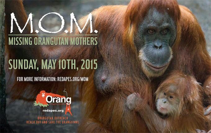 OO-MOM-2015-Eng-2-800w