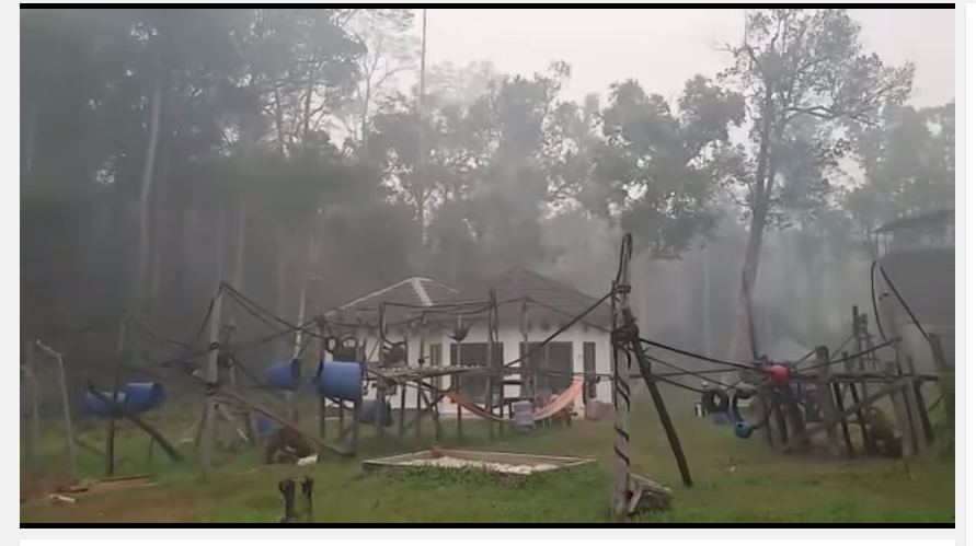 Smoke and haze enveloping the BOS Nyaru Menteng orangutan rescue center. Image © BOSF.
