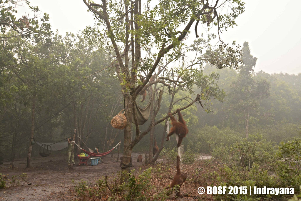 Smoke and haze blanketing the BOS Nyaru Menteng Forest School.