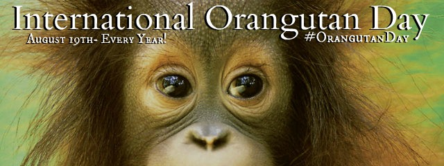 OrangutanEyes