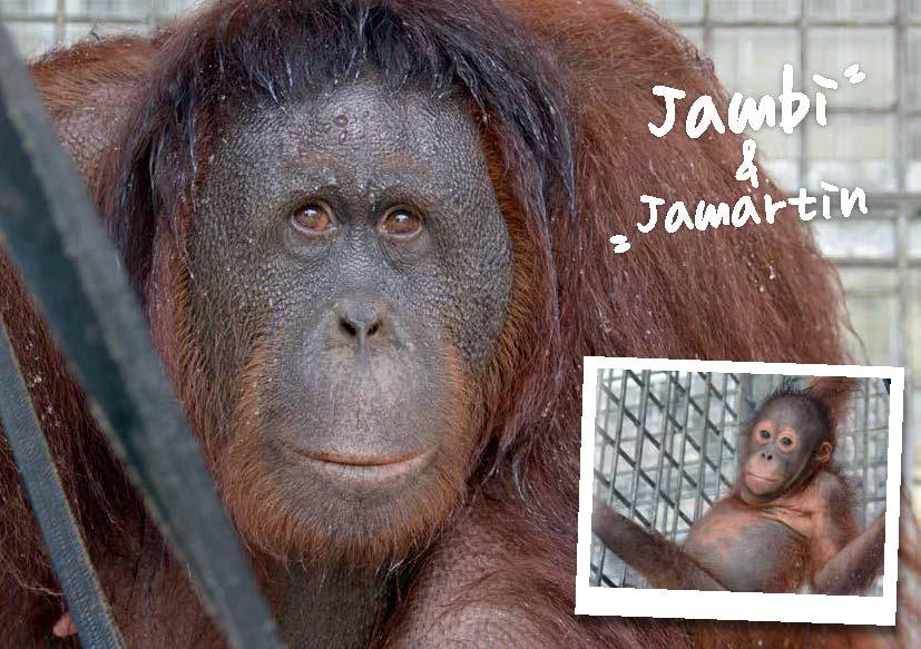Jambi-Jamartin