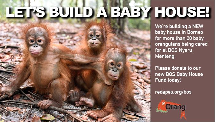 BOS Nyaru Menteng Baby House