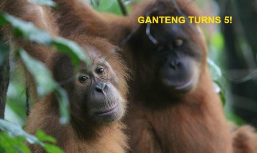 ganteng-turns-5