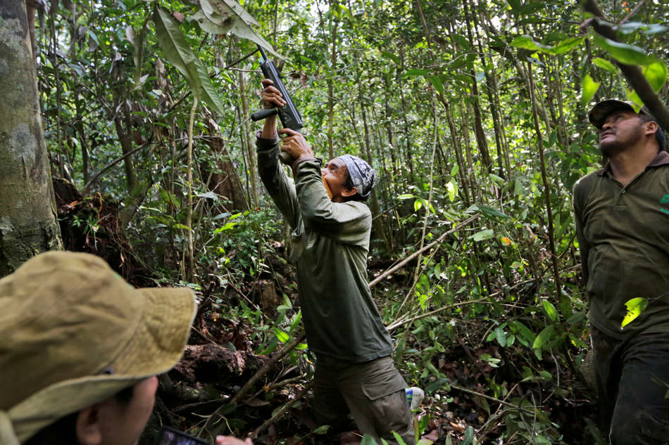 In this Jan. 5, 2016, photo, Tony Setiono, a conservationist from the Borneo Orangutan Survival Foundation, center, fires his tranquilizer rifle at an orangutan high in the trees as they conduct a rescue and release operation for orangutans trapped in a swath of jungle in Sungai Mangkutub, Central Kalimantan, Indonesia. A team of conservationists were deployed to rescue orangutans which lost their habitat to the forest fires last year and relocate them to a new location. (AP Photo/Dita Alangkara)