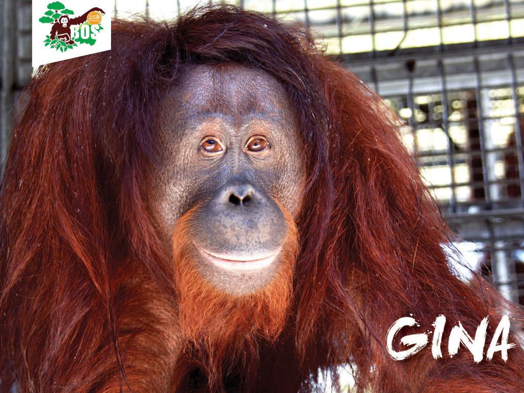 Gina-1024x768