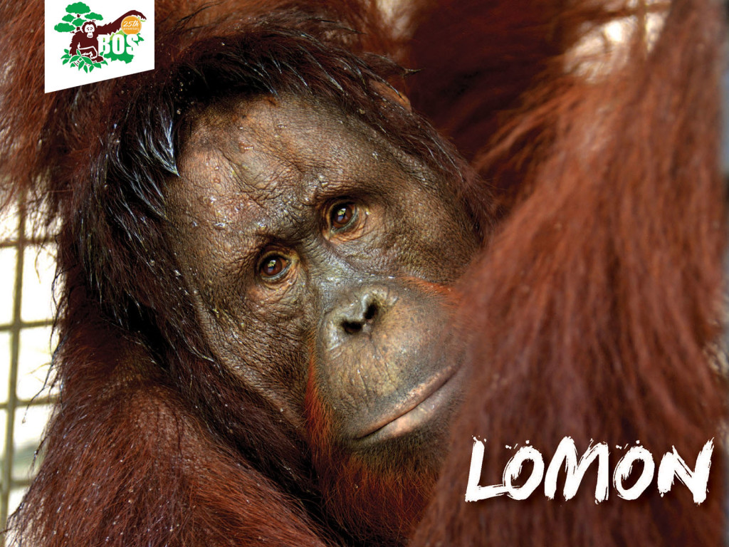 Lomon-1024x768