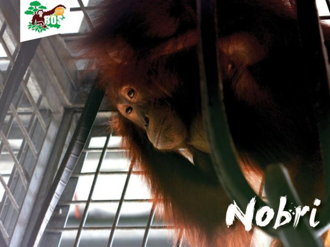 Nobri-1024x768
