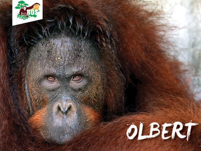 Olbert-1024x768