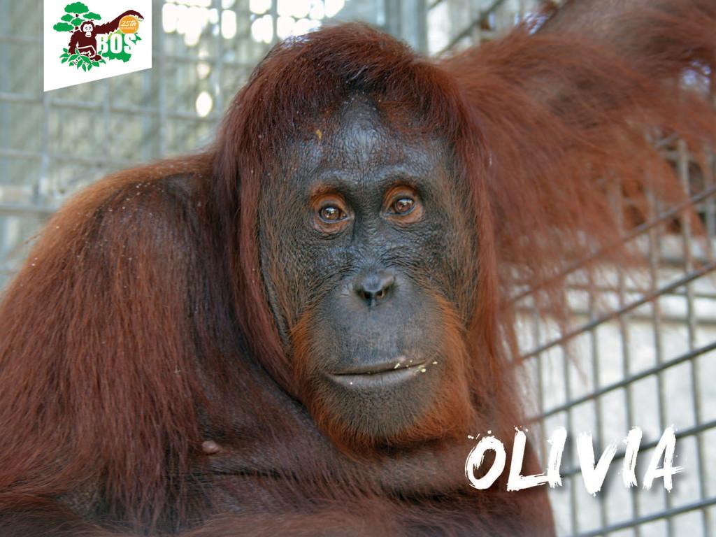 Olivia-1024x768