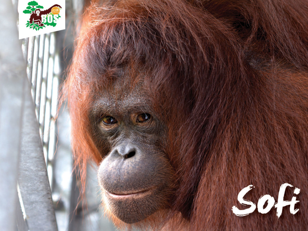 Sofi-1024x768