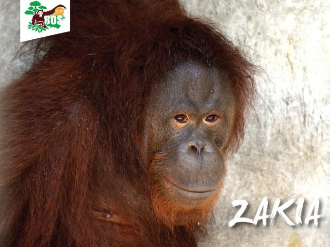 Zakia-1024x768