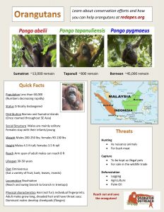 Orangutan Fact Sheet